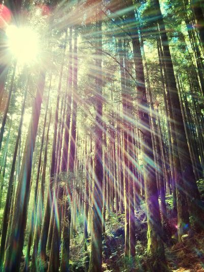 Woods Into The Light Azzzores