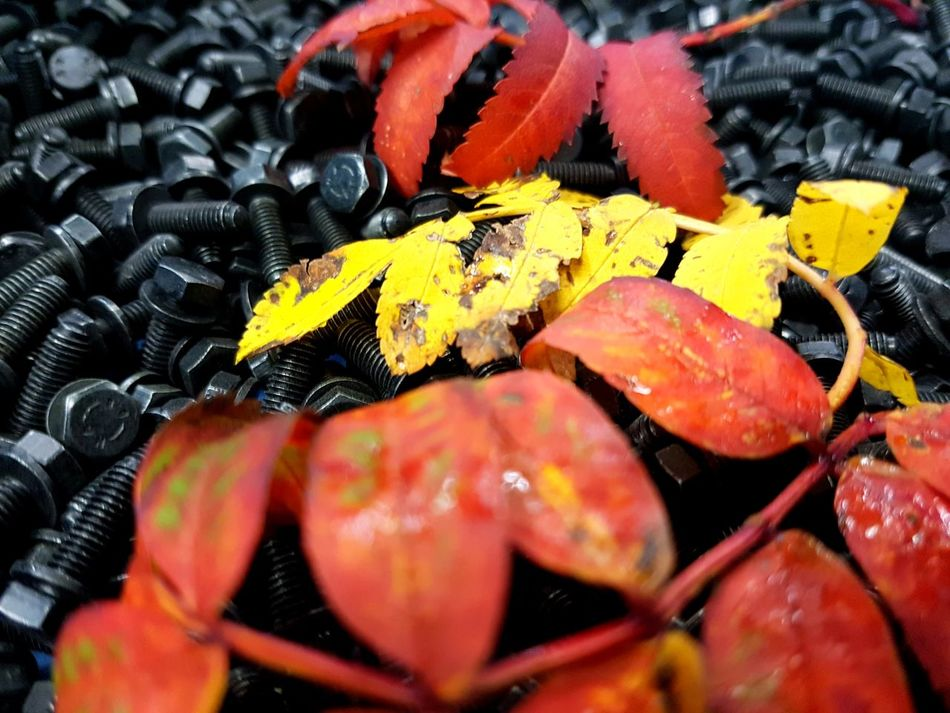 Nature & Metal Españoles Y Sus Fotos Close-up Symplicity Streamzoofamily Details Textures And Shapes Nature Red Autumn