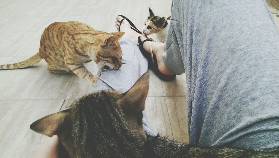 Beautiful stock photos of baby katzen, Animal Themes, Cairo, Cat, Egypt