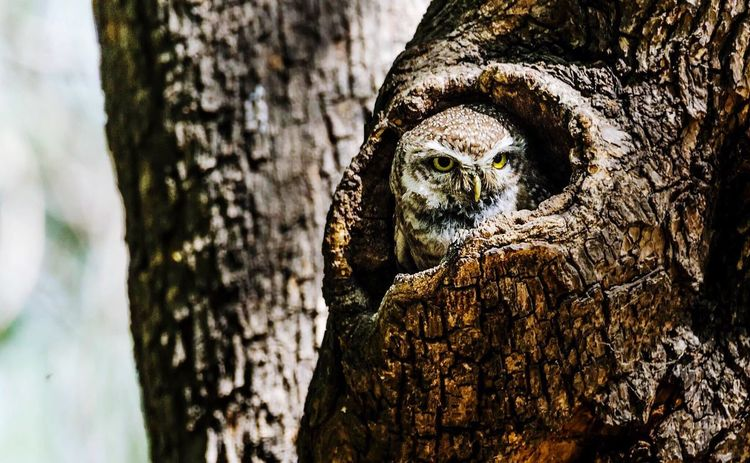 Tree Trunk Tree Bark Close-up Brown Owl Inside Tree