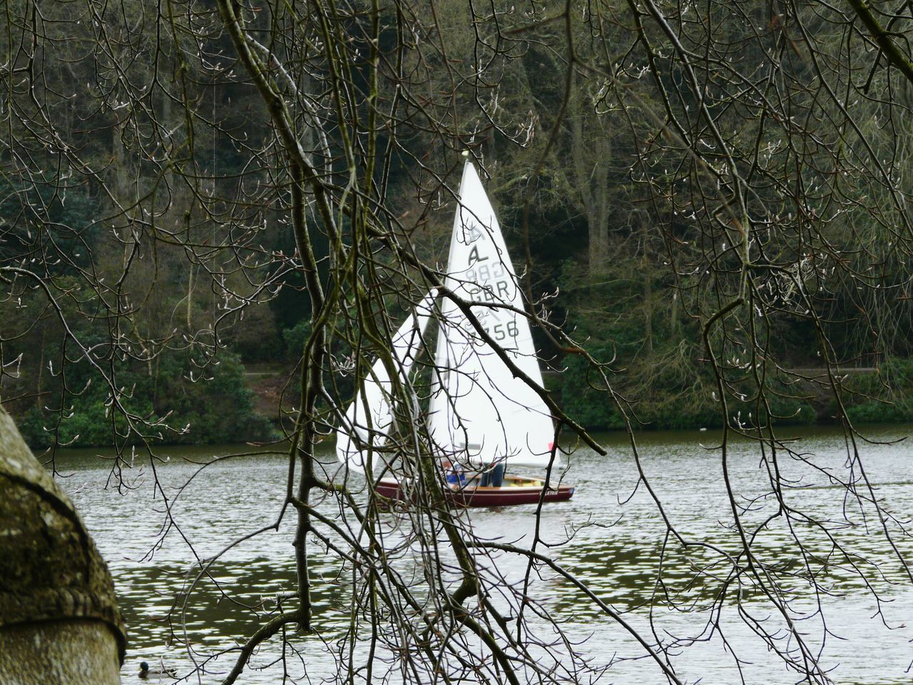 Lakeside Walk Yeah Springtime! New Shoots🌱 Nature On Your Doorstep Sailing Boat Showcase April