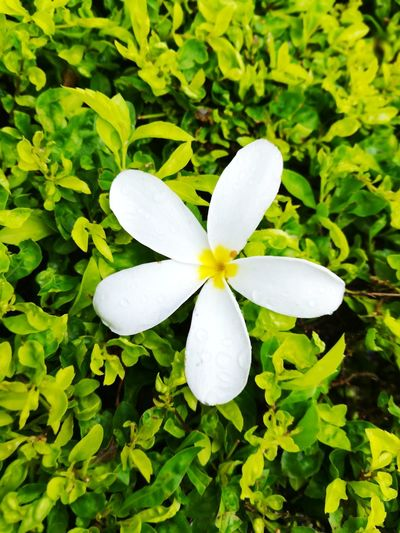 Flower Flower Head Petal Close-up Nature Plant Growth Fragility Green Color Leaf Freshness Beauty In Nature Day No People Outdoors