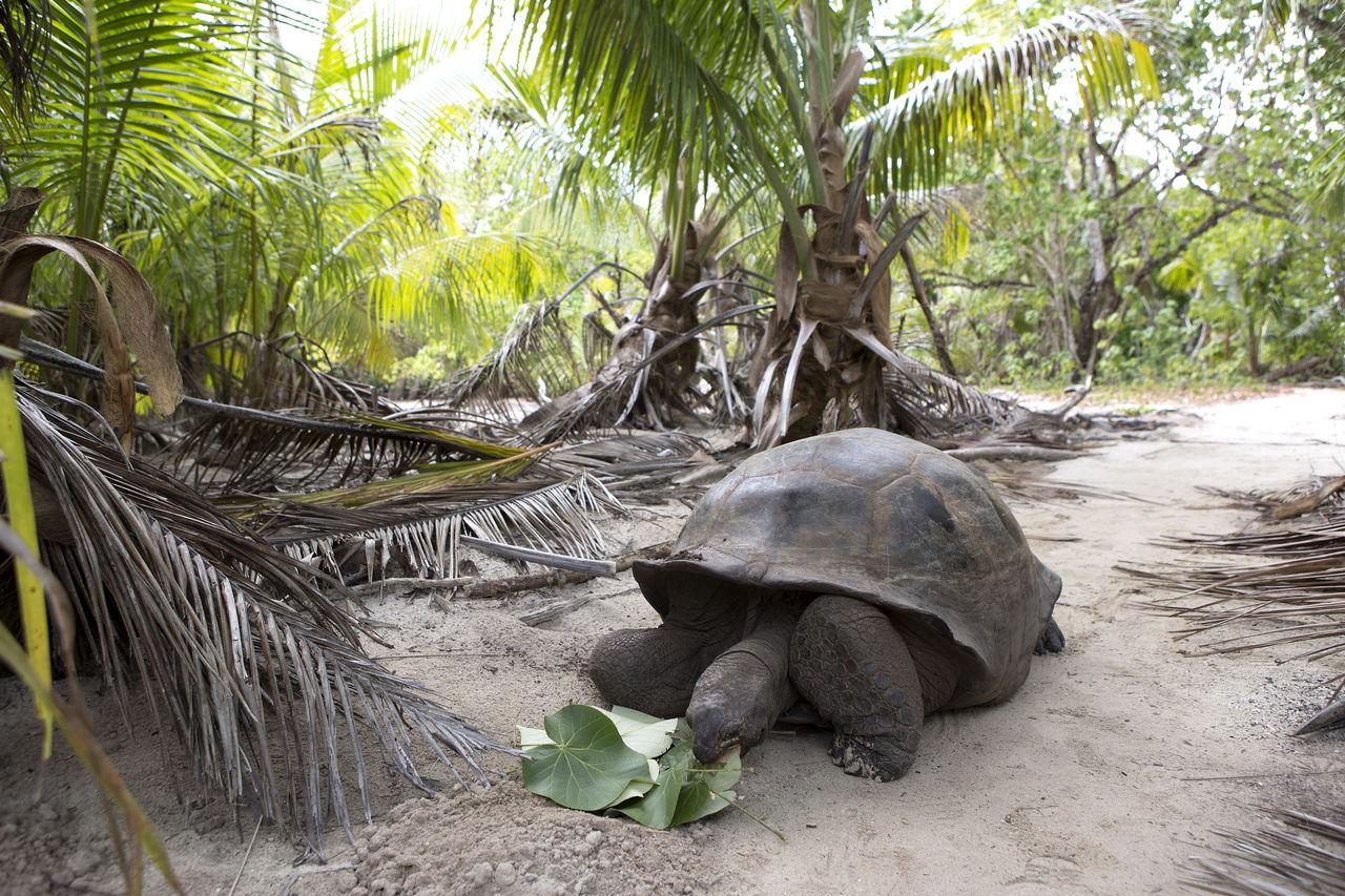 Animal Welfare Curieuse Island Giant Tortoise Nature Seychelles Tortoise