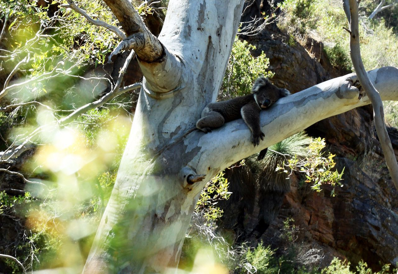 tree, tree trunk, no people, day, outdoors, nature, growth, close-up, branch, dead tree, beauty in nature