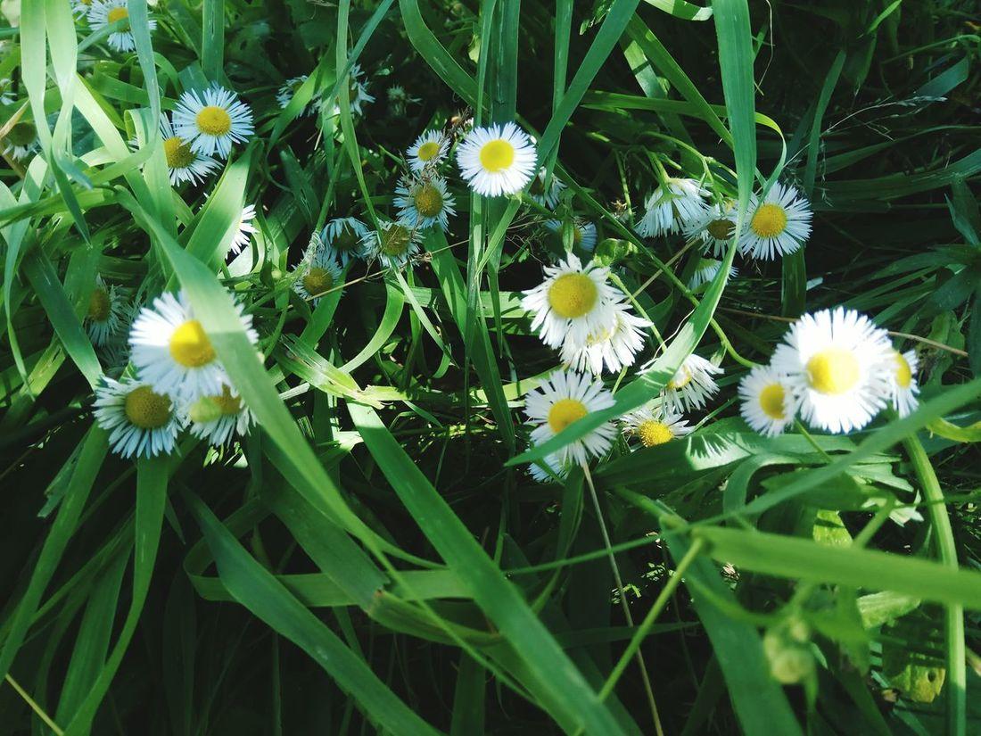цветы лютики Flowers природароссии Nature_collection Русское поле