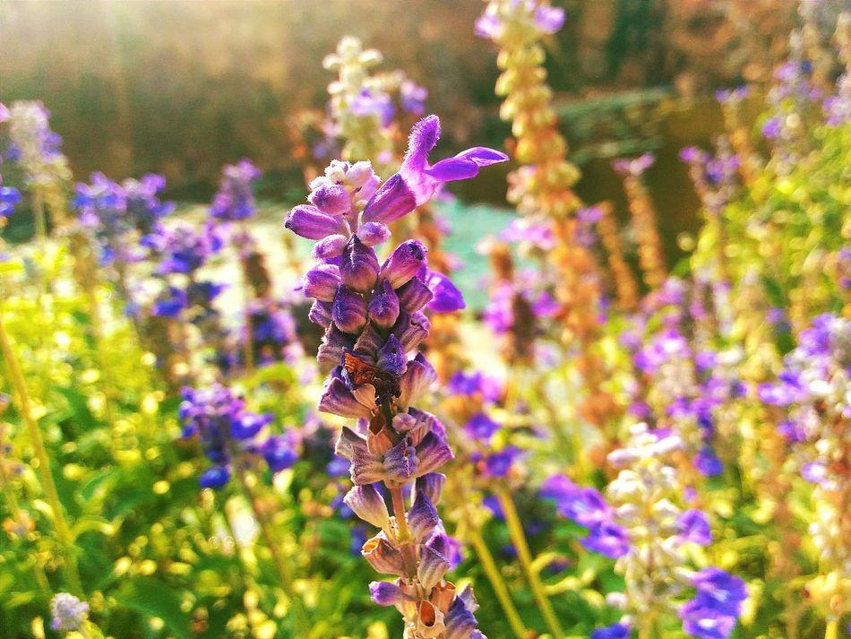 Lanveder Flower Collection Flower VSCO Vscocam Vscoflower Zenfone2laser Asus