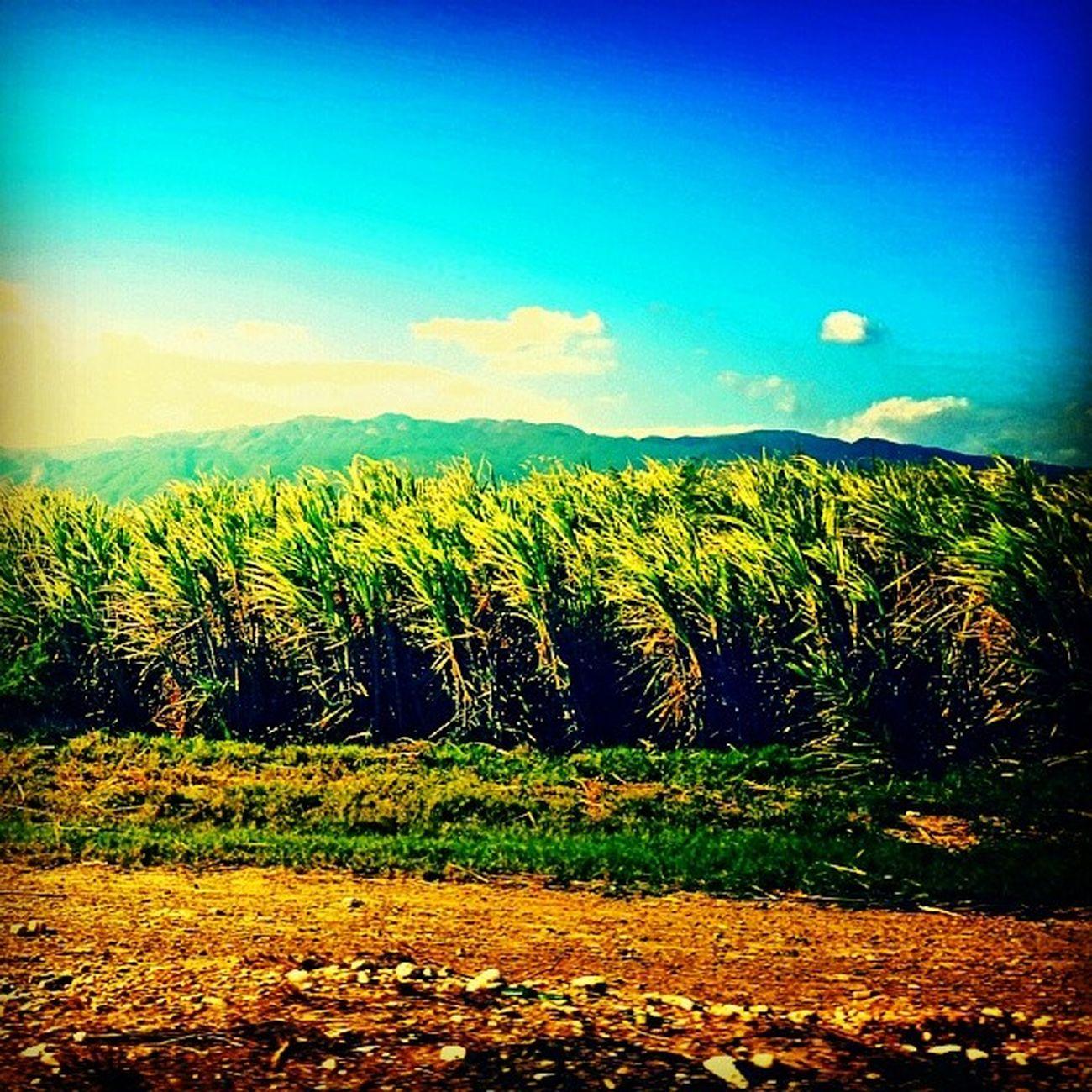 Ya casi llegamos a La Hacirnda Campo Me Palahacienda Instapic hacienda love semanasanta cielo cute summer vacaciones sun pasto natural