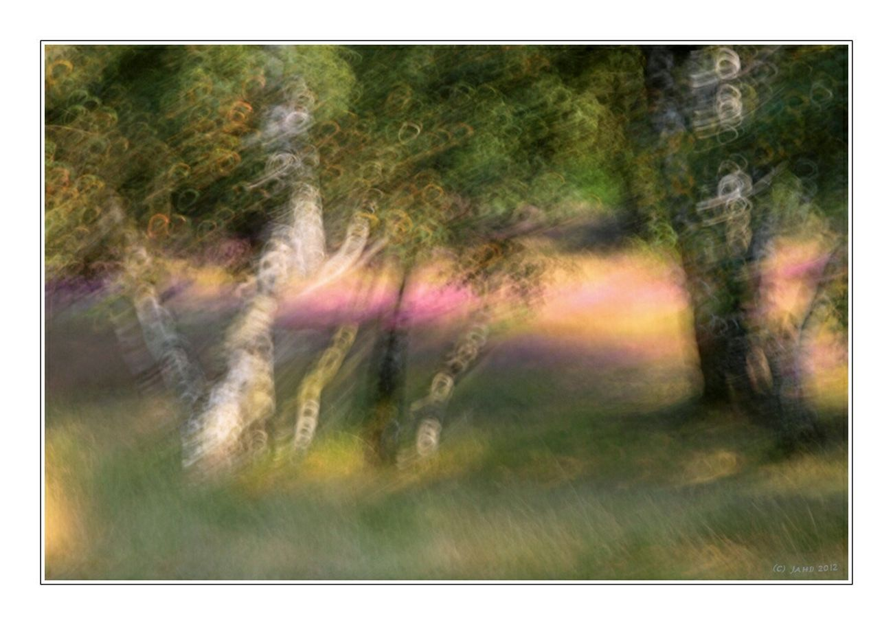 Abstract Impression Impressionism Trees Tree Tree_collection  Impressions Experimental Experimenting... Experiments Experiment Impressionen Verwackelt Unscharf Unsharp Unfocused Verwischt Verwischtes Bild Out Of Focus Colors