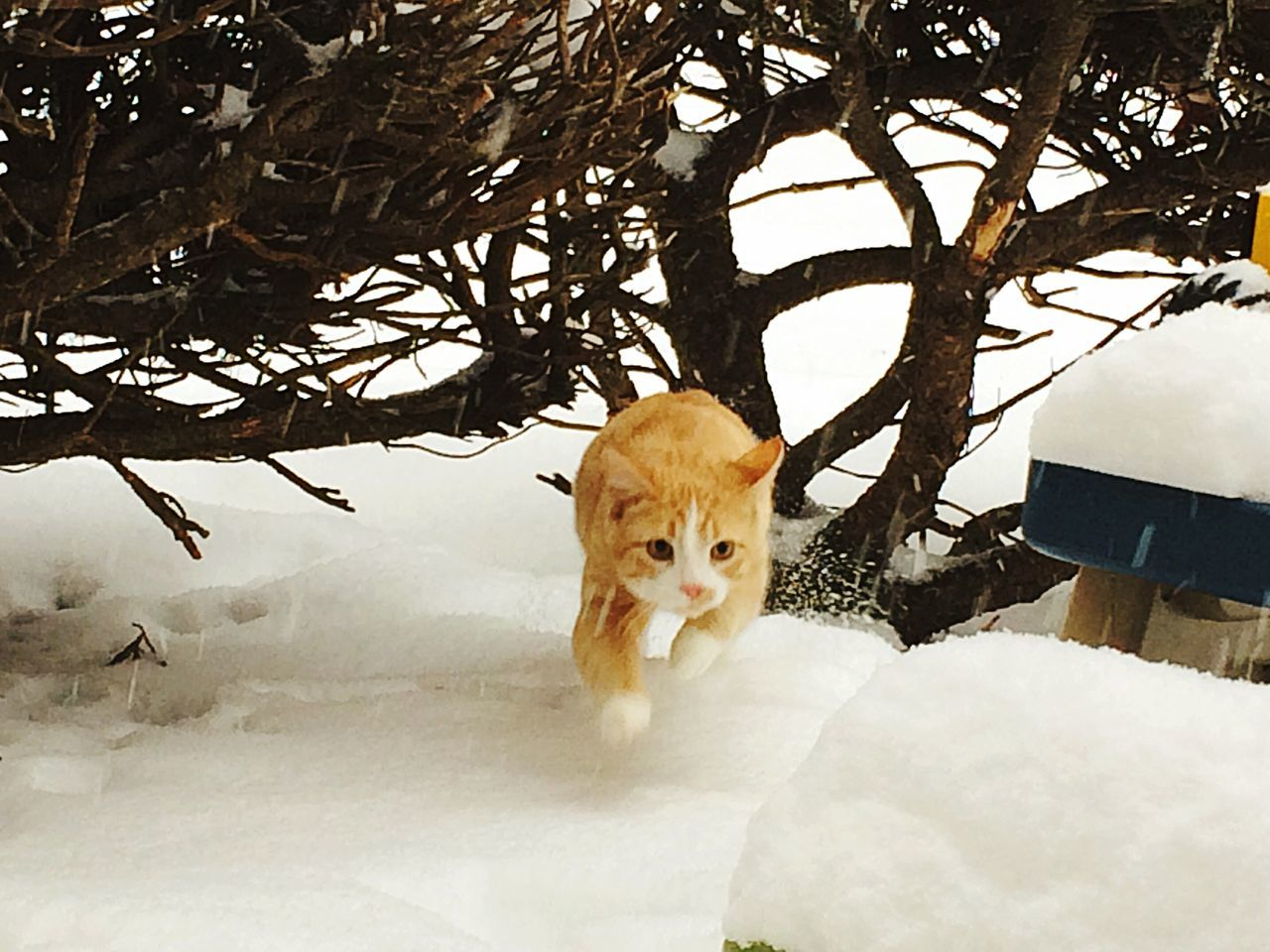 Cats Of EyeEm Kittiesofinstagram Kittiesinthesnow