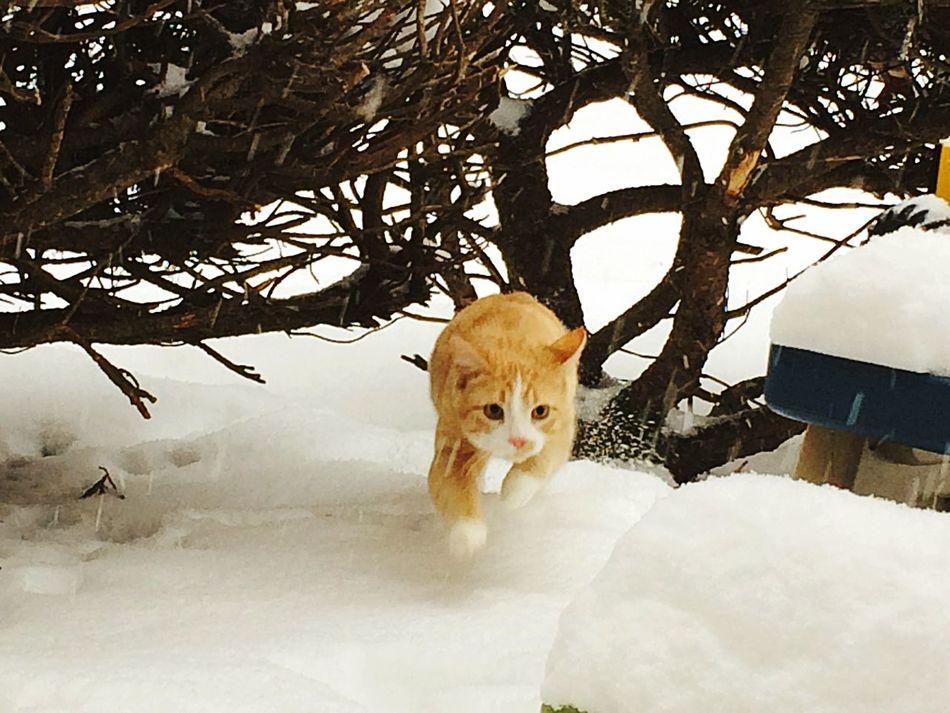 Cats Of EyeEm Kittiesofinstagram Kittiesinthesnow
