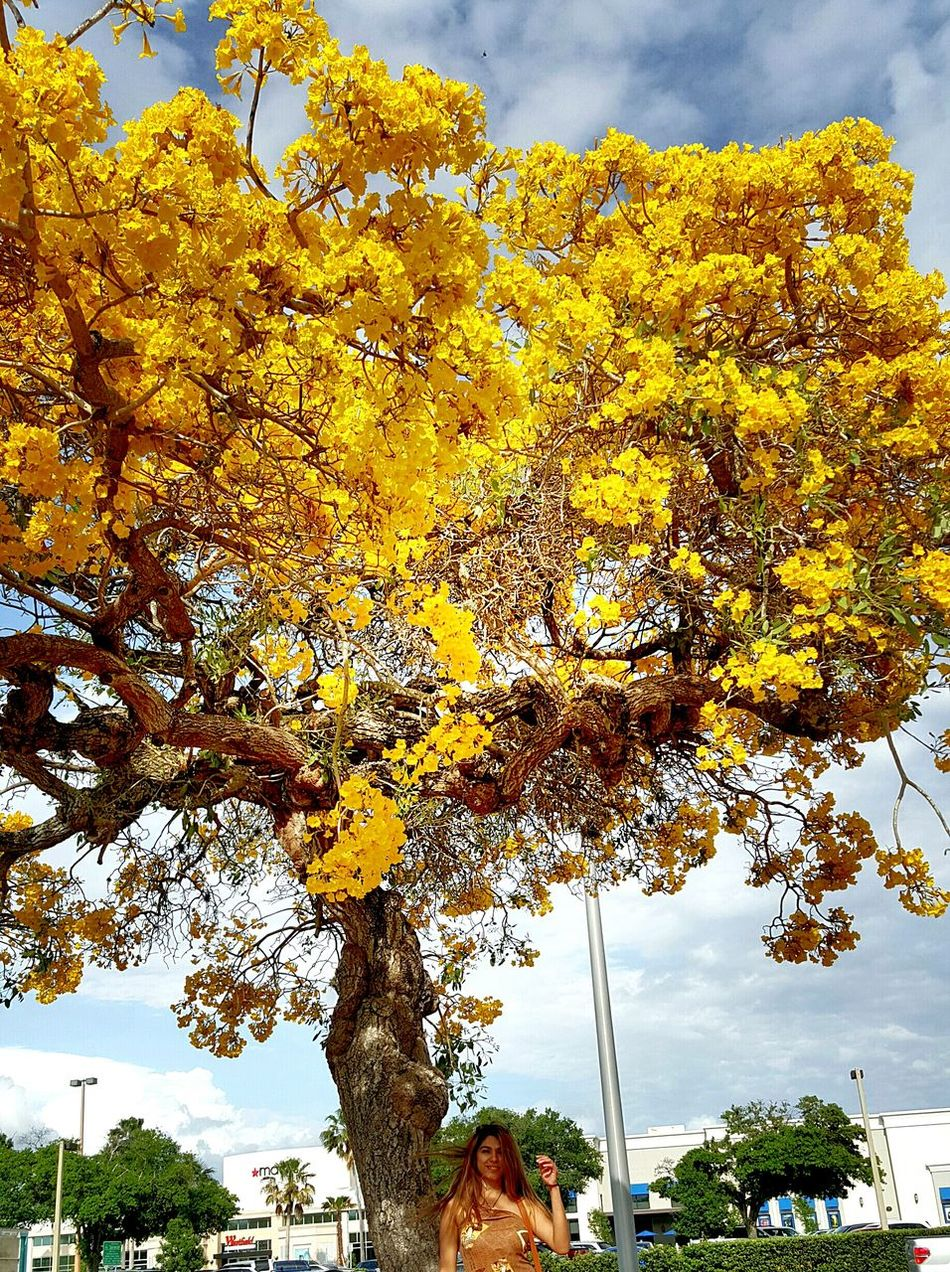 Go with the flow... Yellow Nature Tree Outdoors Low Angle View Autumn Growth Beauty In Nature Sky Day Florida Life Tree Lover EyeEm Best Shots - Nature Beautiful Saturday Today EyeEm Gallery Nature Photography Heart Tree Heart Hair Blowing In The Wind Windy Day