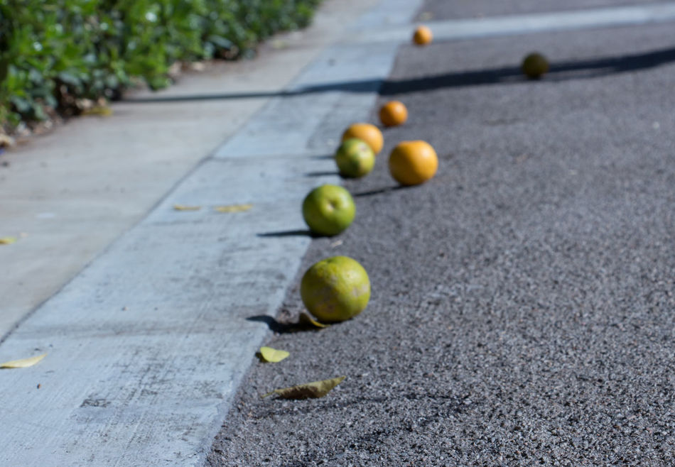 Mandarins Unusual Perspective Autumn Focus On Foreground Outdoors No People Freshness Day Fruit Finding New Frontiers Adapted To The City The City Light Resist