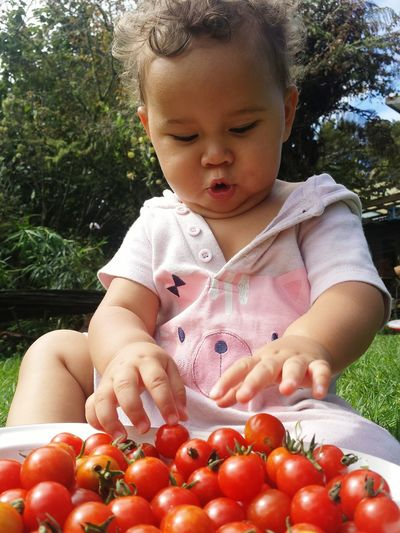 Lifestyles Looking Down One Person Babies Only Healthy Eating Healthy Lifestyle Human Body Part Fruit Outdoors Childhood Freshness Close-up Organic Growing EyeEm Best Shots EyeEm Best Edits High Angle View Food And Drink Real People Gardener Gardening Tomatos I Grew This