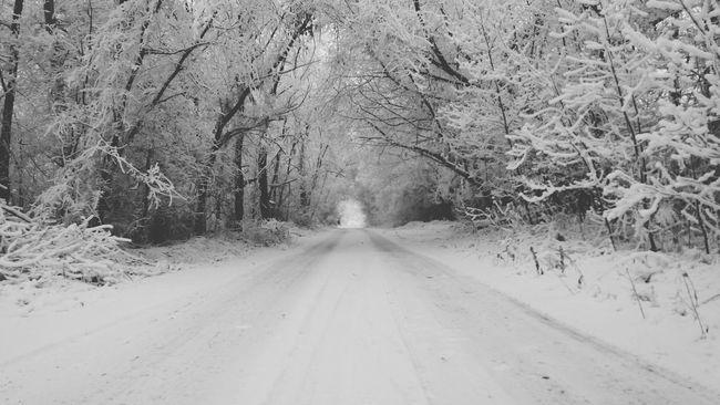 Road Snow❄⛄ Nature Tree The Way Forward Winter First Eyeem Photo