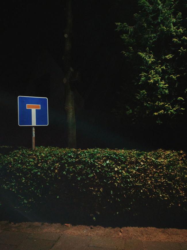 Leaf Light Rays Nexus6P Night Road Sign Tree VSCO