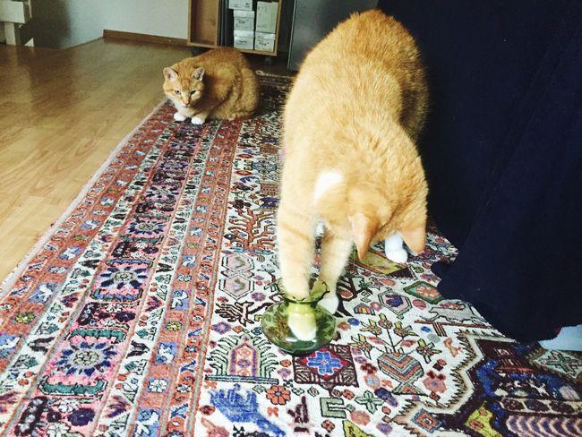 Cat Thinking SuperCat Katzenfotografie EyeEmNewHere 3XSPUnity Cat Photography My Project Ginger Cat Playing Cat Thinking Cat Clever Cat Genius From Myself Cat Toy My Cat♥ Katz Pets Indoors  I Love My Cats  Magic Cat
