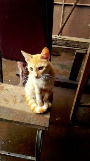 Cat Cat Lovers Orange Kitty Kittycat Animal Huawei Huaweiphotography Huaweigplaymini Animal Shot