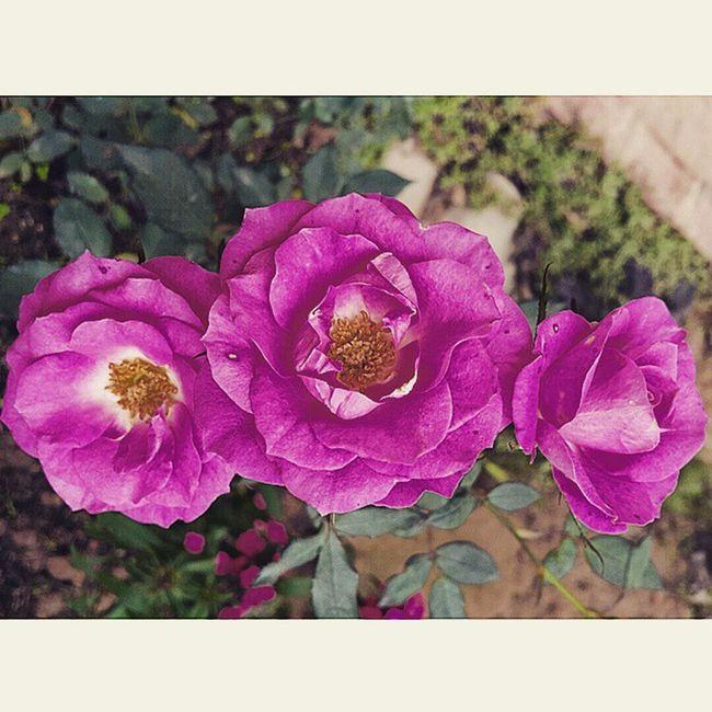 君はあたしにとって大切なんだよ。😢😢😢 恋 花 愛 Lesbian Love Nevergiveup 負けるもんか Flowers Pink ステキな