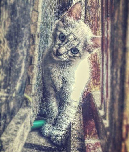 Cat♡ Cats 🐱 First Eyeem Photo Cat Lovers Gatosfelizes Gatos 😍