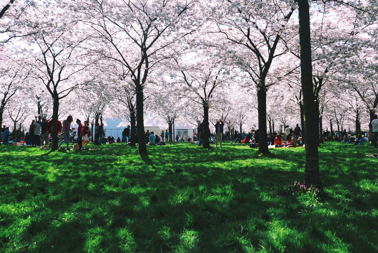 Blossom garden in the Amsterdamse Bos. What a lovely place today! Bare Tree Beautiful View Branch Day Field Grass Green Color Growth Large Group Of People Leisure Activity Lifestyles Light And Shadow Men Mixed Age Range Nature Park Park - Man Made Space Person Shade Sunny Tourist Tree Tree Trunk EyeEm X Google - Your Amsterdam