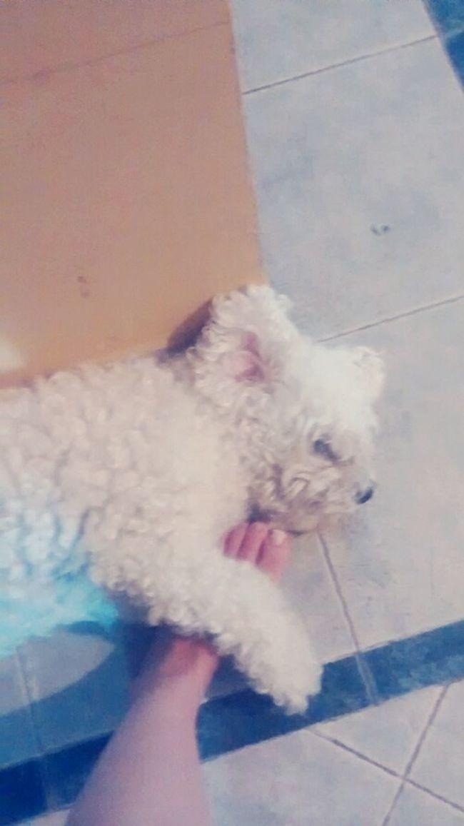She won't let me go ??. PuppyLove Bestfriend❤