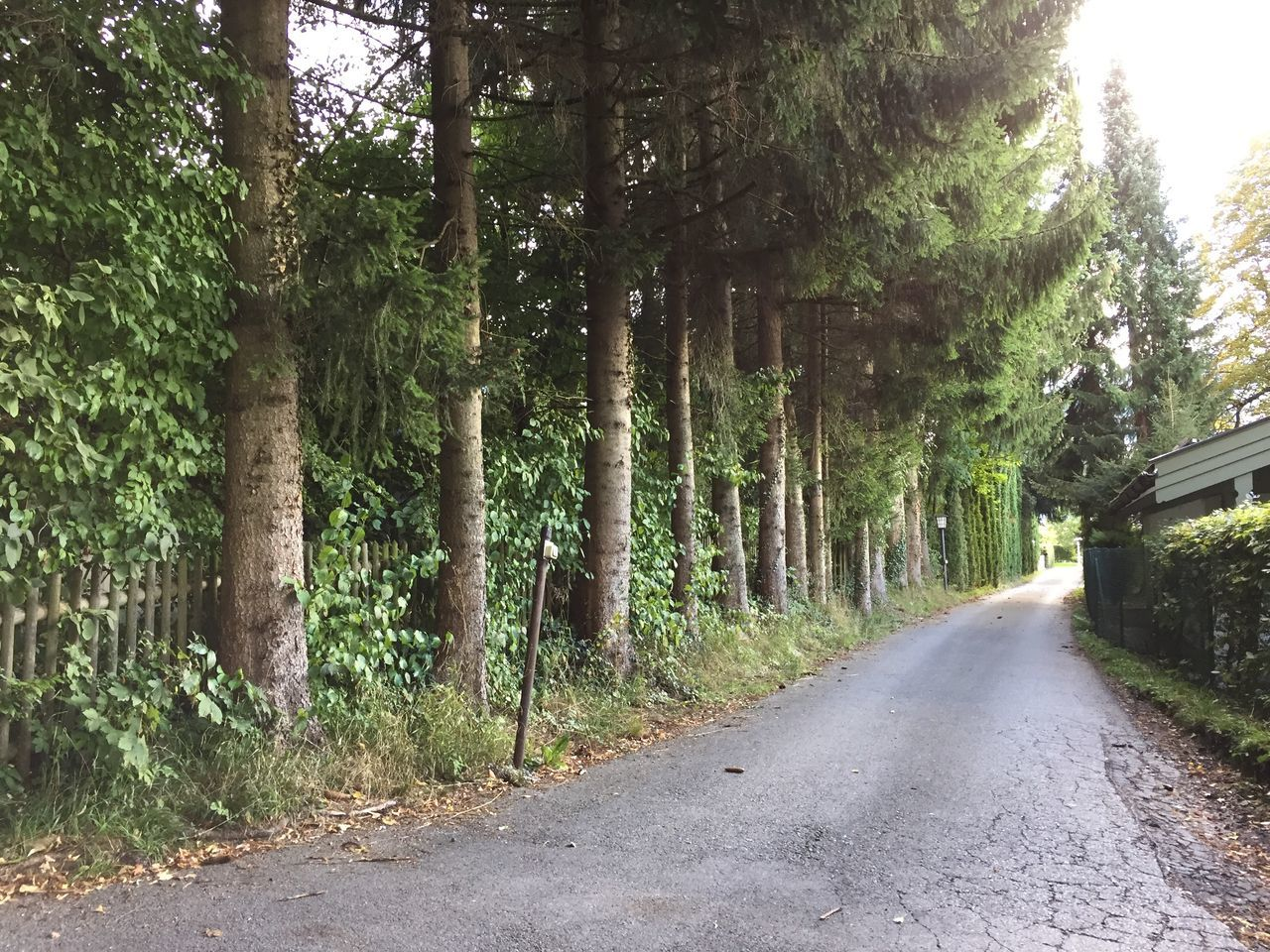 tree, the way forward, road, nature, day, outdoors, no people, tree trunk, tranquility, transportation, scenics, growth, forest, beauty in nature