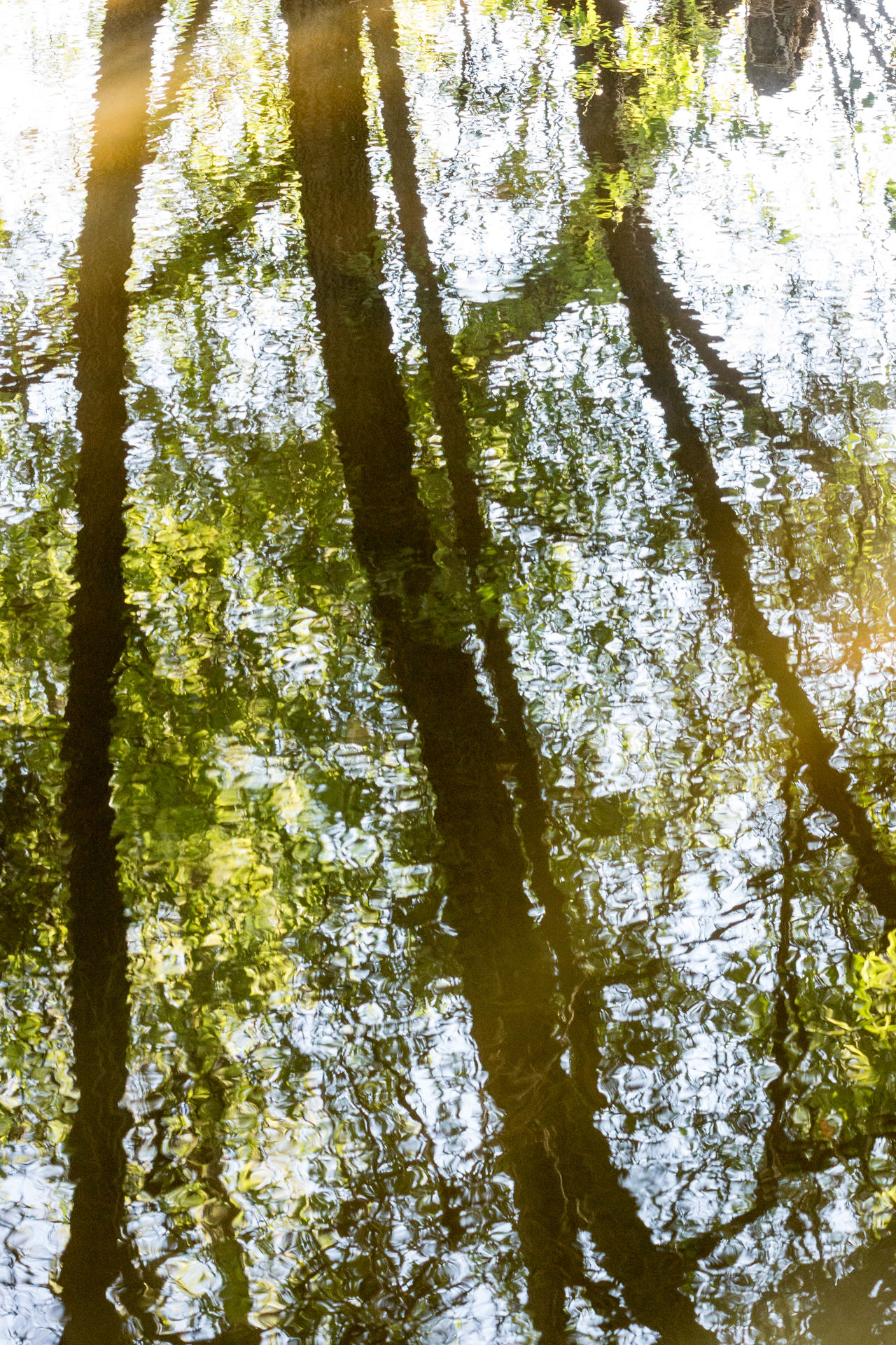 Tree Nature Green Color Beauty In Nature No People Day Outdoors Branch Water River Reflections Ripples In The Water Trees