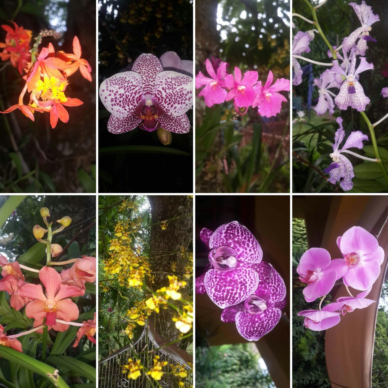 8 types of Orchids blossoming in hime garden Nofilter Outdoors Orchids Orchid Blossoms OrchidLover Varitation Beauty In Nature Naturelovers Allnatureshots