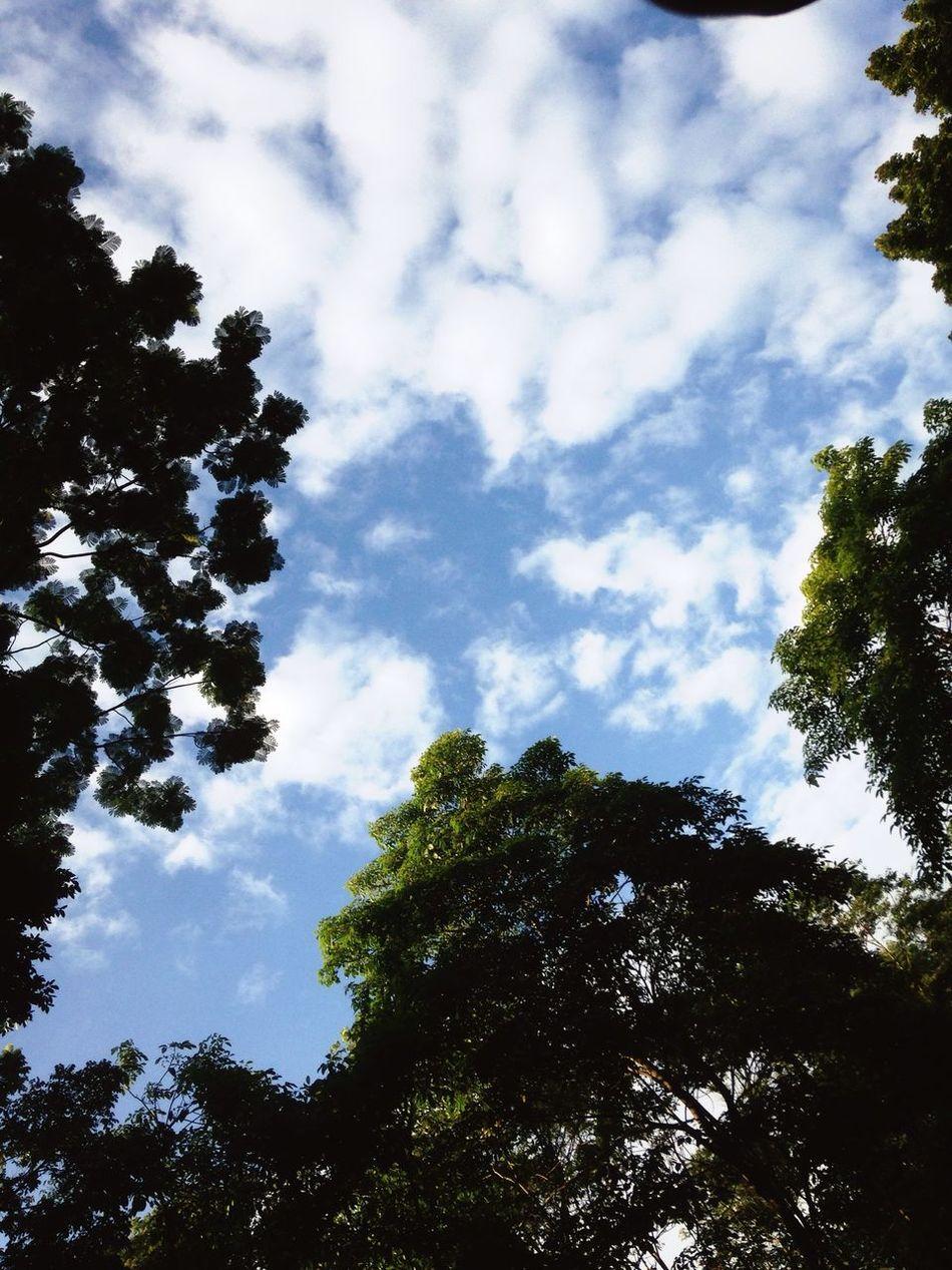 🌳🌳🍃 Nature Photography Relaxing First Eyeem Photo Ecuador Green