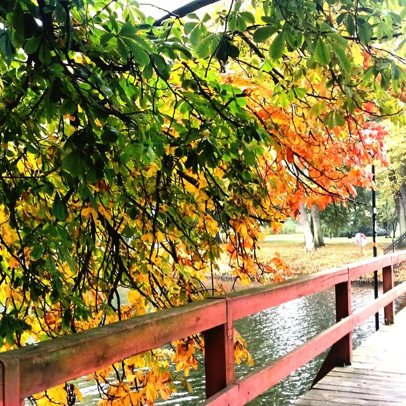 Autumn leaf... Hanging Out Enjoying Life Hello World Enjoying The Sights