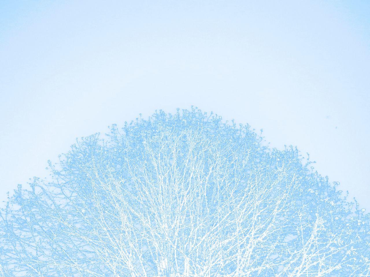Sky Fluo  Colors Nature Beautiful Artistic Photo Artphotography Art Photography Artistic Photography Artsy Tree