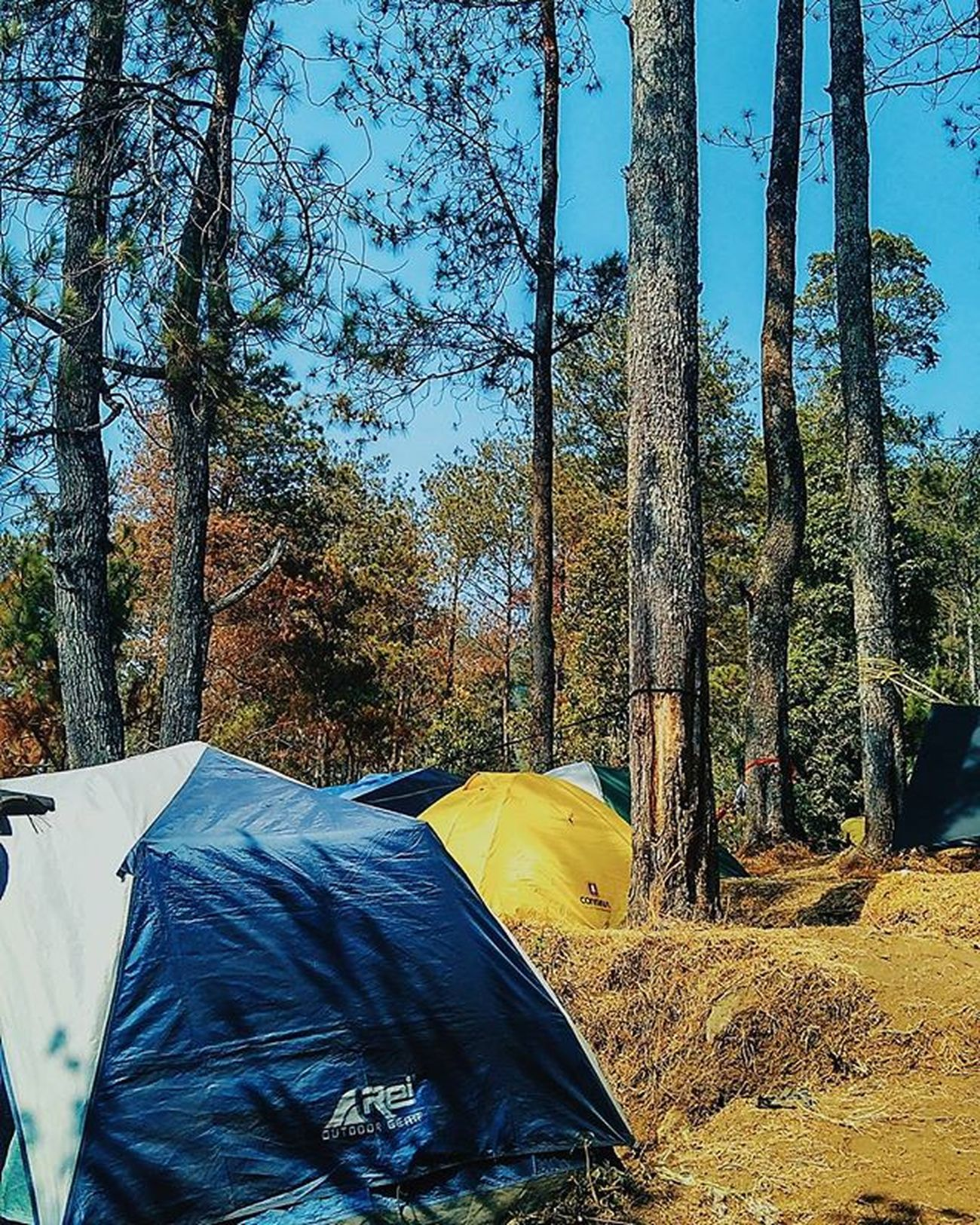 Mawarcamp Camp Ungaranmountain Exploresemarang Nature Semaranghits Place VSCO Vscocam Xiaomiography Xiaomi_id Redmi2camera Xiamiclick_id Blue Trees Great Awesome Phonegraphy Photosemarang Jatengeksis Good Instalike Instagram Like4like Teamdoubletap picture instanusantara