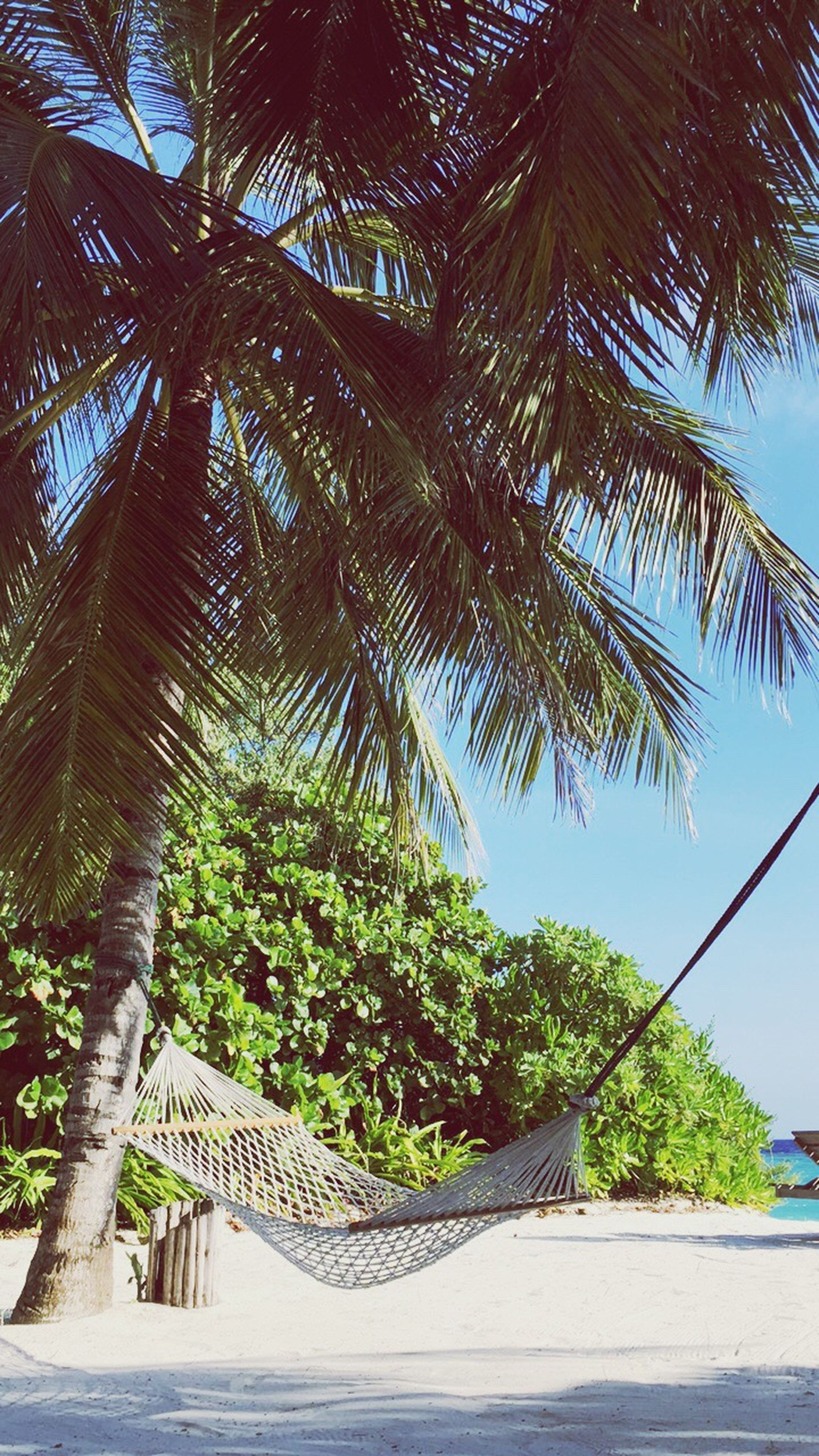 palm tree, tree, growth, low angle view, tree trunk, green color, tranquility, nature, vacations, sky, tranquil scene, outdoors, day, scenics, tropical tree, beauty in nature, palm frond, tourism, railings, green, tourist resort, footpath