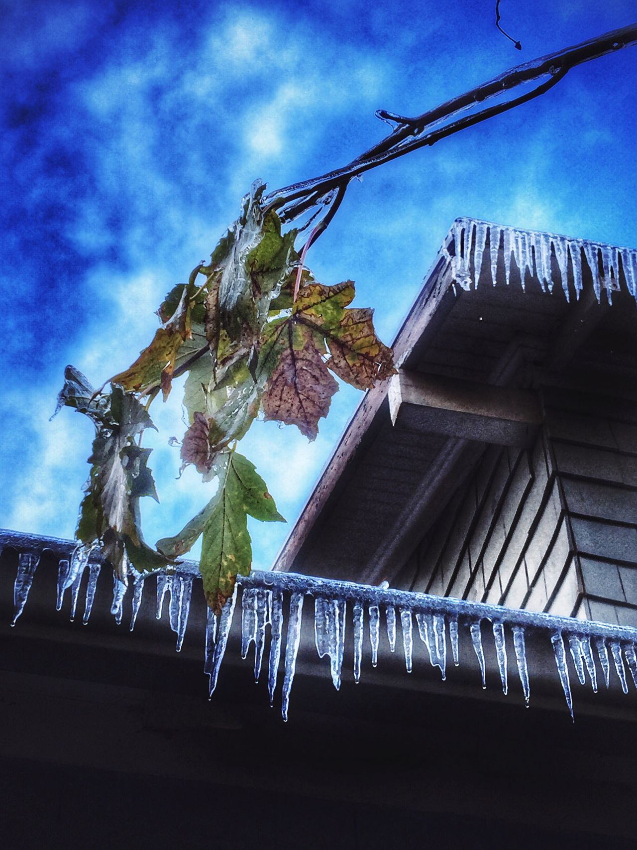 Icecycles Sky Building Exterior Built Structure Architecture Cloud - Sky Outdoors HDR Leaves Still Hanging On Weathered Views Natural Condition Beauty In Ordinary Things View Shapes In Nature  Winter Cold Frozen Cold Temperature Ice Weather