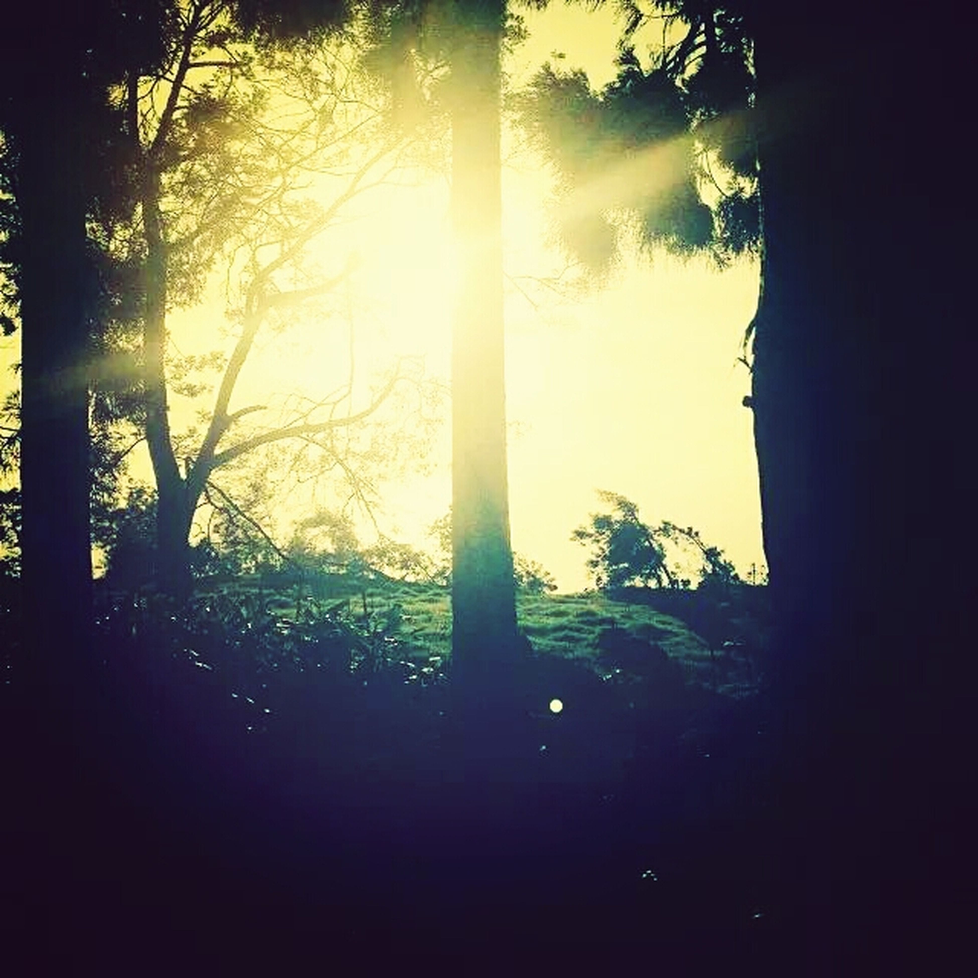 tree, silhouette, sun, sunset, tranquility, tranquil scene, sunlight, tree trunk, sunbeam, beauty in nature, growth, scenics, nature, lens flare, back lit, sky, forest, branch, idyllic, no people
