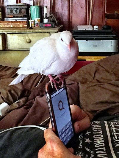 Jeepers Tecnology Meets Nature Dove In The City Bird Human And Bird Eye Em Nature Lover White Color Hanging Out White Dove Friendly A Bird's Eye View Close Up Technology
