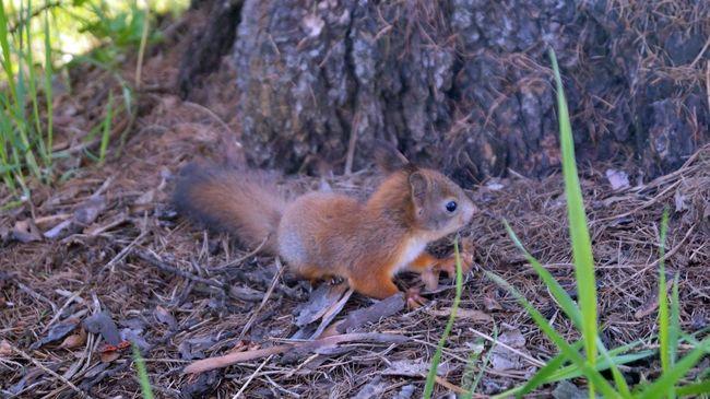 белка животныймир маленькоечудо Природа