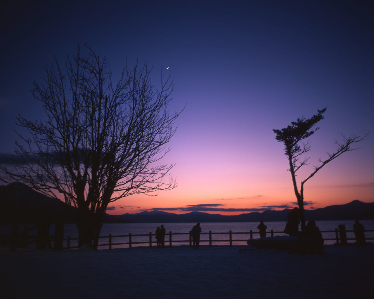 Beauty In Nature Blue Enjoying Life Eye4photography  EyeEm EyeEm Best Shots EyeEm Gallery EyeEm Nature Lover Film Film Photography Fujifilm Hokkaido Holiday Japan Nature Night Pentax PENTAX67 Purple RVP50 Sea Sky Sun Sunset Tree