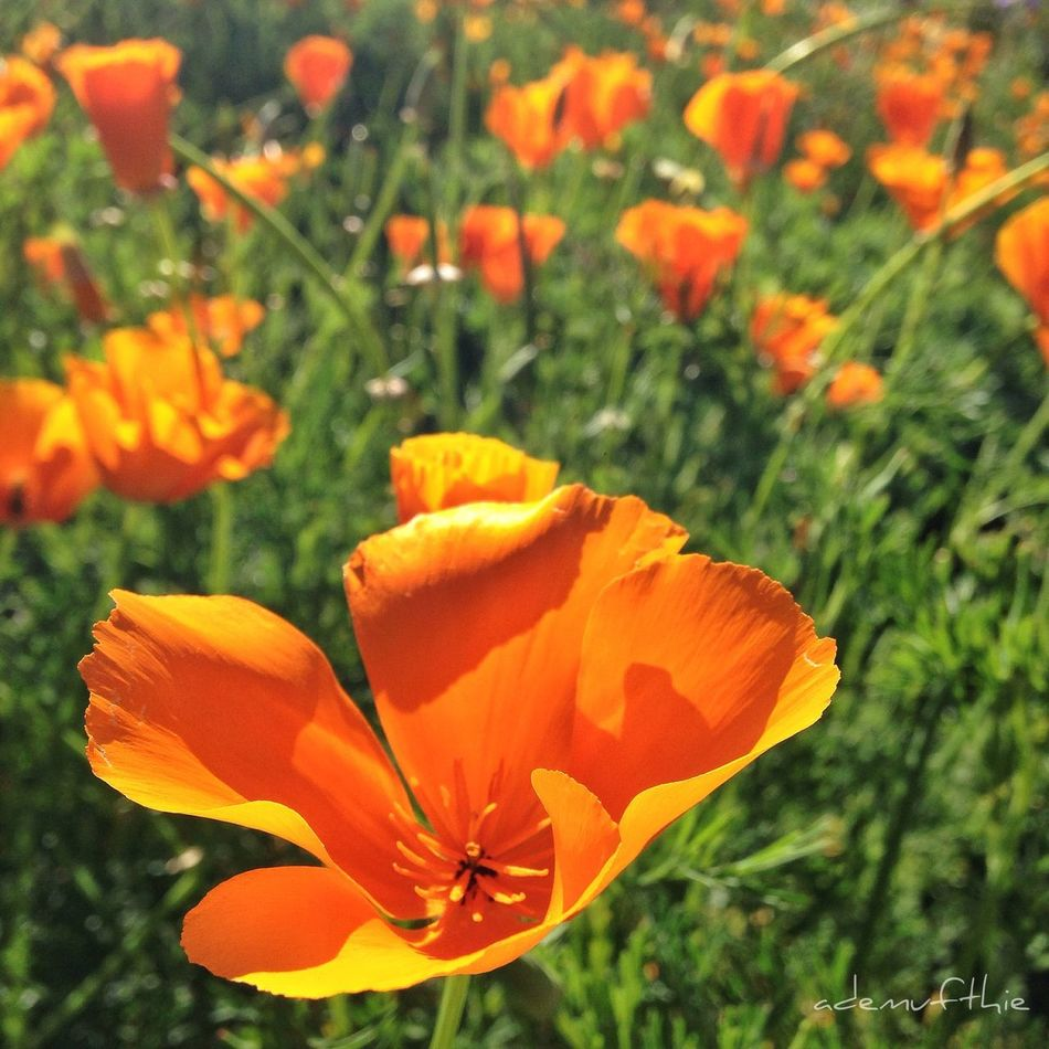 Spring in Pasadena  Beautiful EyeEm Best Shots HDR Nature Flowers IPhoneography
