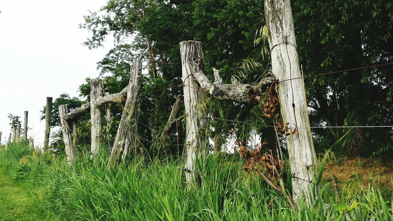 Fenceline Grass Green Color Tree Growth Nature Outdoors Day No People Beauty In Nature Sky