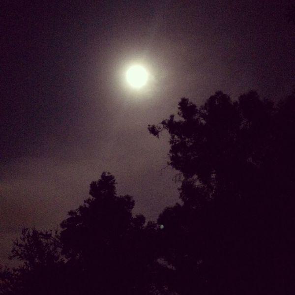 Moonlight Full Moon Supermoon 2014