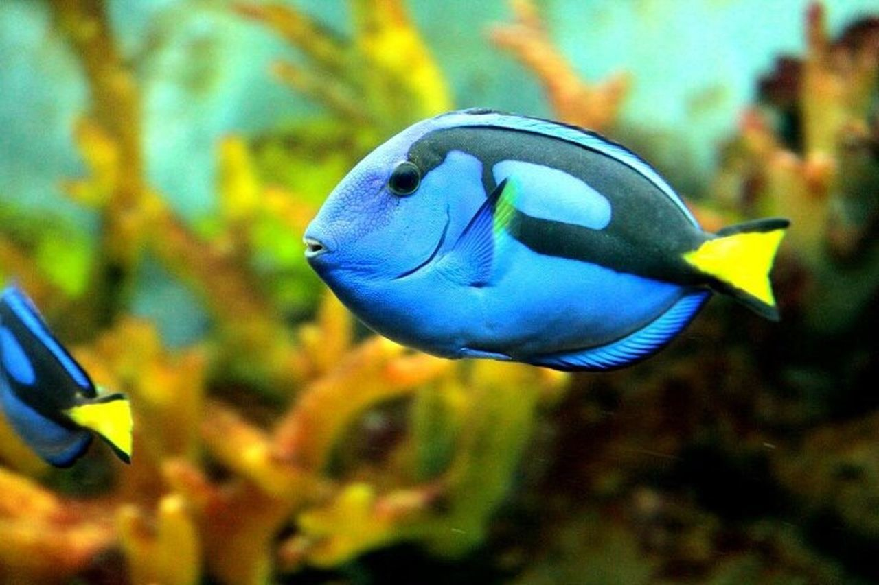 underwater, fish, sea life, animal themes, one animal, animals in the wild, aquarium, undersea, close-up, swimming, water, no people, focus on foreground, animal wildlife, nature, multi colored, blue, sea, day, outdoors, beauty in nature