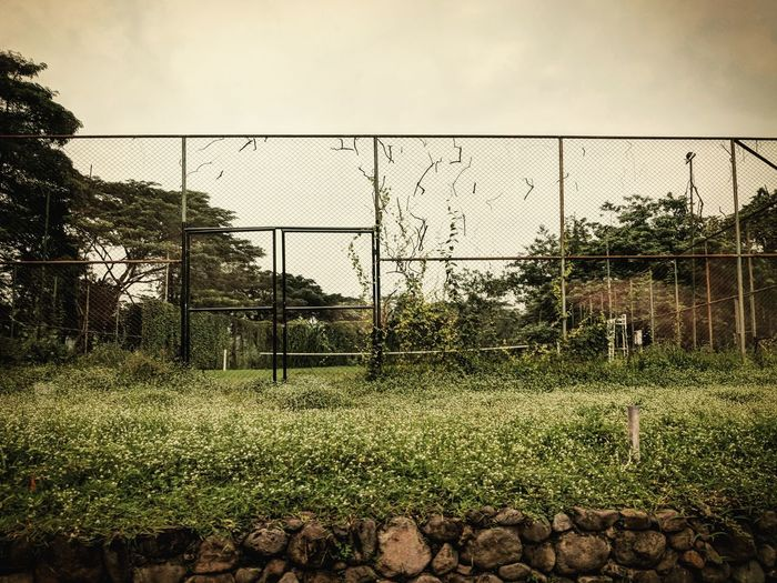 Overgrown Tennis Court Travel INDONESIA Travel Destinations Tennis 🎾 Overgrown Overgrown And Beautiful Overgrown Places Forgotten Forgotten Places  Gorgeous Surreal Green