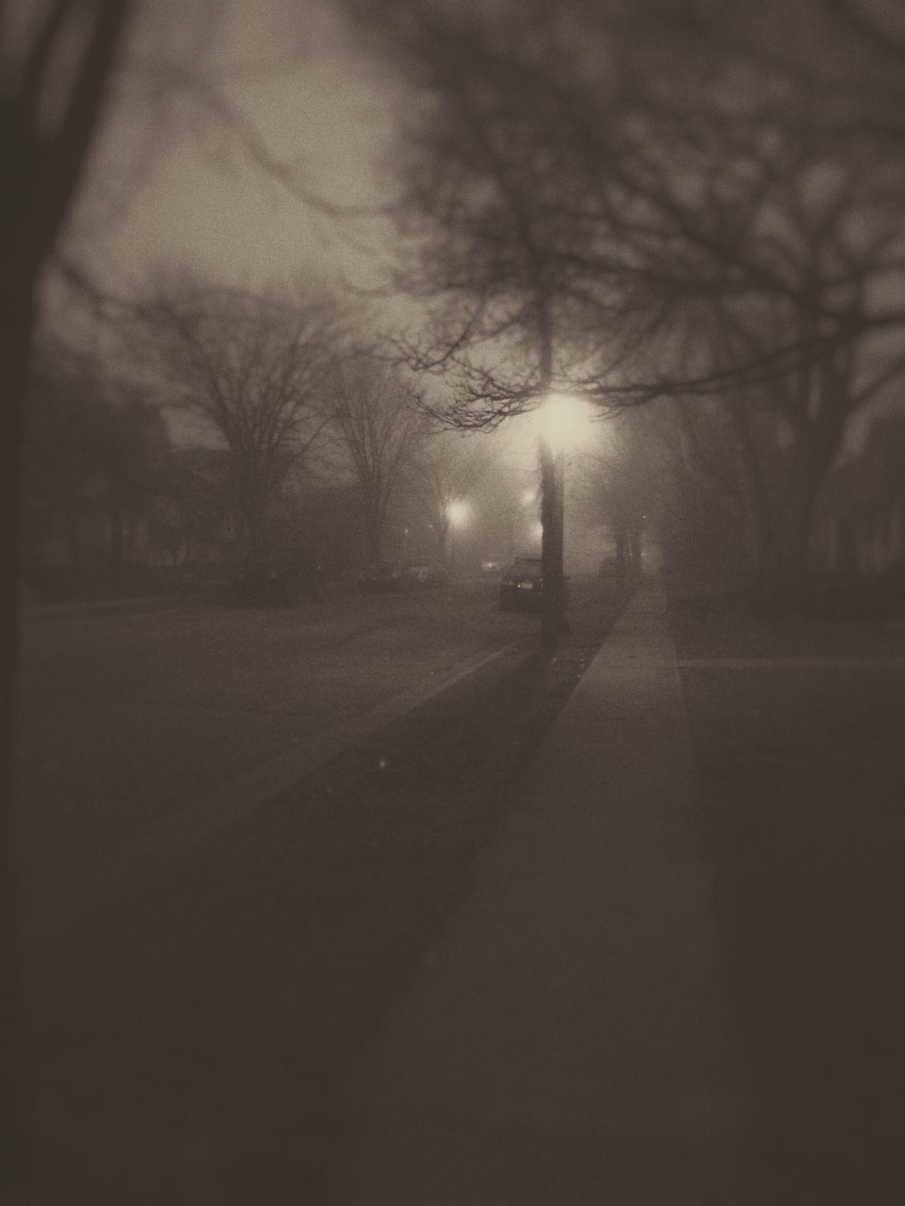 Foggy Bare Tree Outdoors Nature Road Sky Street