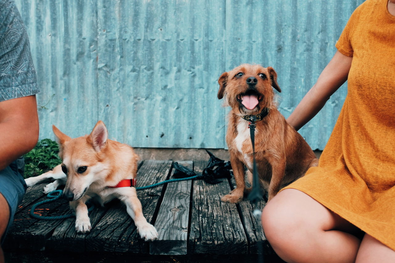 Doggie models. Pets Dog Domestic Animals Animal One Person Animal Themes People Obedience Adult Purebred Dog One Animal Mammal Happiness Portrait Human Body Part Adults Only Sitting Friendship Protruding Puppy Lgv20 Lgv20photography Sommergefühle