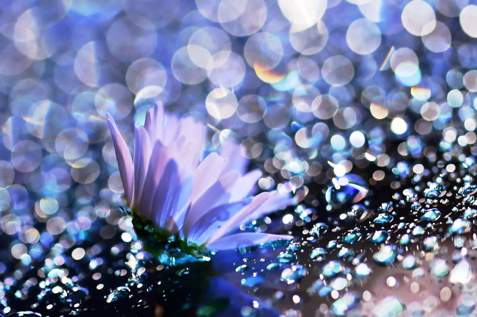 Beauty In Nature Capture The Moment Close-up Creative Light And Shadow Drop EyeEm Best Shots EyeEm Nature Lover Flower Fragility Freshness Illuminated Japan Lens Flare Nature Night No People Outdoors Pastel Purple Still Life Art Is Everywhere