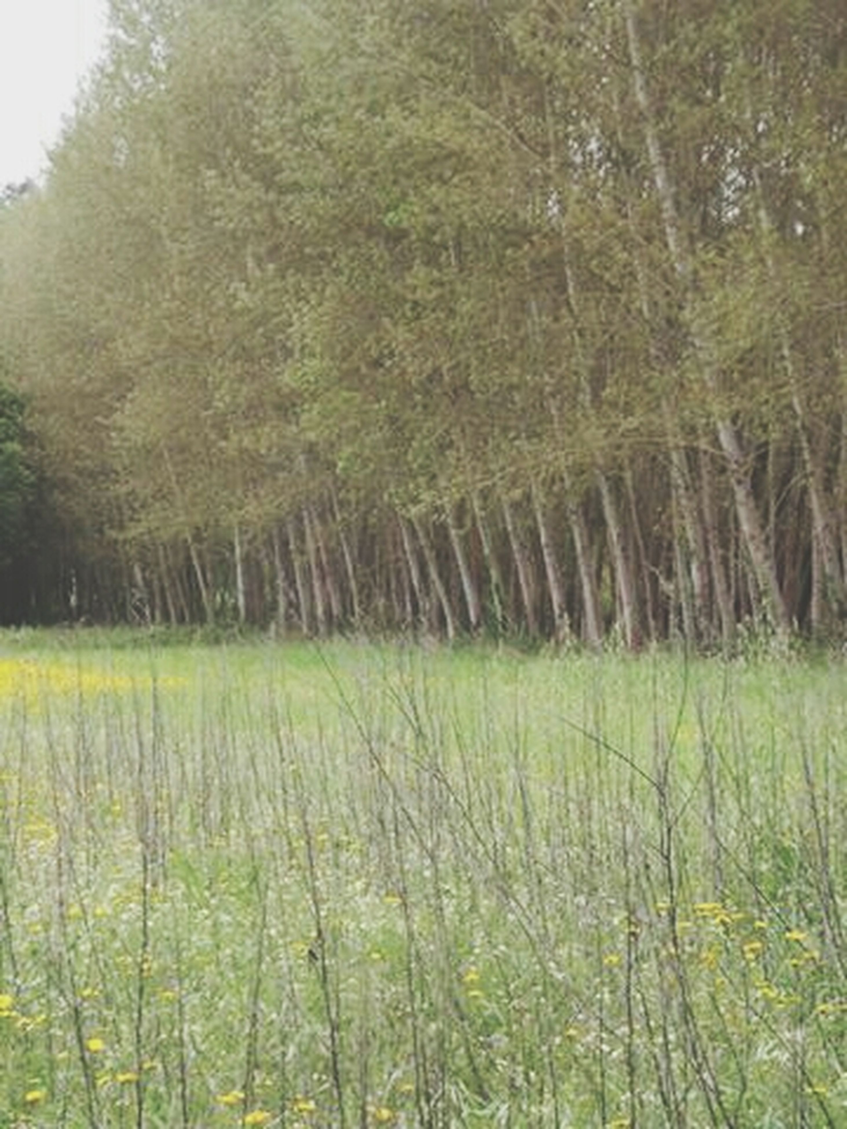 growth, field, tranquility, grass, nature, tranquil scene, beauty in nature, green color, tree, agriculture, plant, landscape, rural scene, scenics, crop, farm, growing, day, outdoors, no people
