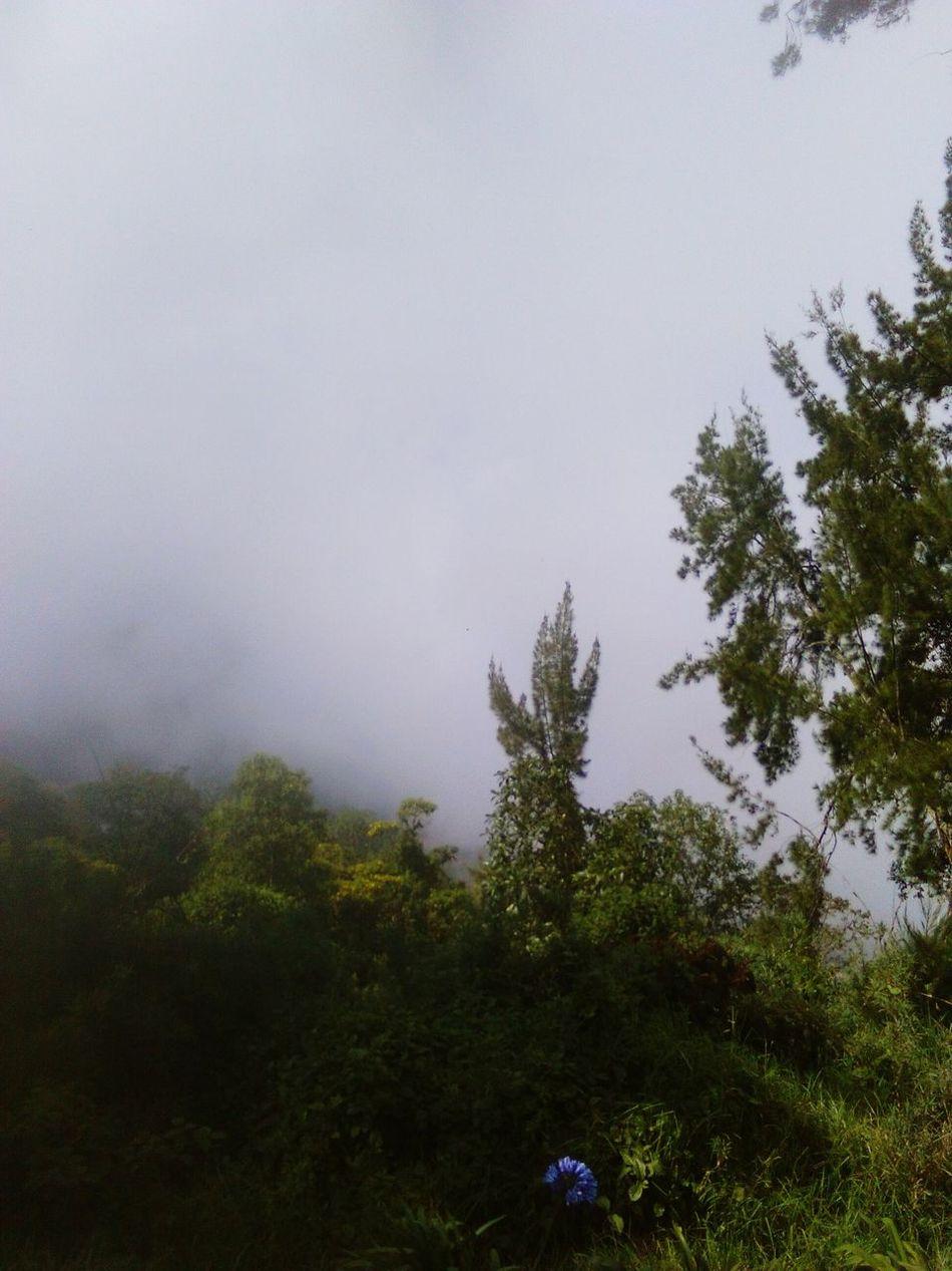 Perfecto es su clima Tree Nature Beauty In Nature Forest No People Horizontal Outdoors Tranquility Sky Landscape Day Lush - Description Avila Venezuela Clima Neblina *-* Venezuela_captures Caracas Altura Travel Destinations People Horizontal