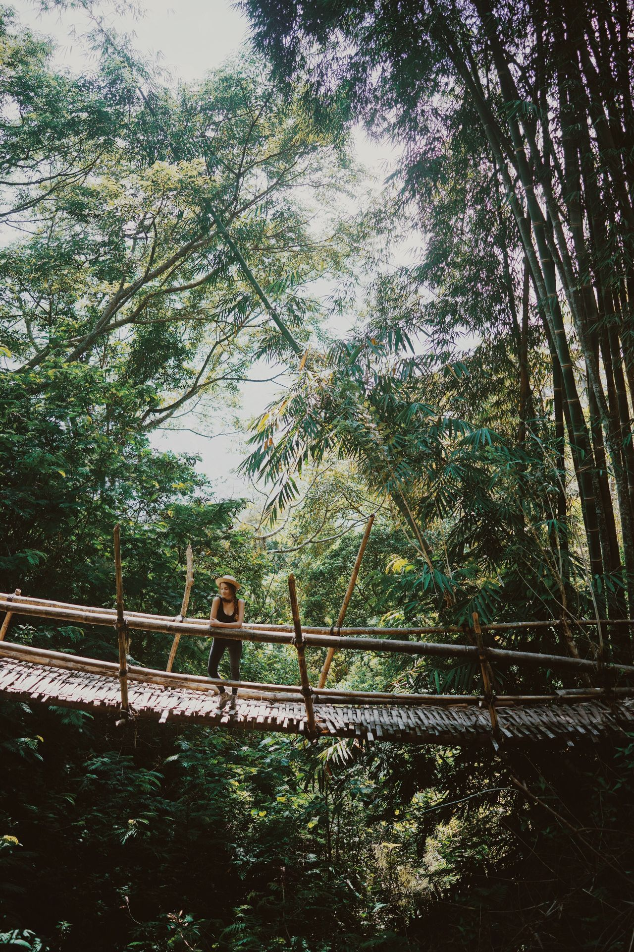 Bridge Rainforest Bamboo Green Vegetation Outdoors Nature Beauty In Nature Forest Girl Young Woman Hiking Adventure Lush Greenery Traveling ASIA INDONESIA Flores Wae Rebo Hat Tropical Paradise Exploring Travel Destinations Day