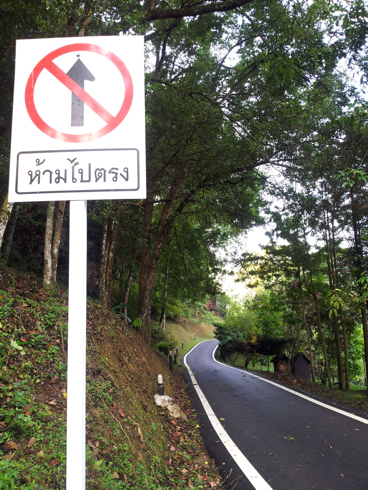 Communication Countryside Day Direction Forest Grass Nature No People Outdoors Road Road Sign Sky Speed Limit Sign Text The City Light The Way Forward Tree Winding Road